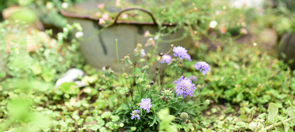 小さな庭のものがたり。