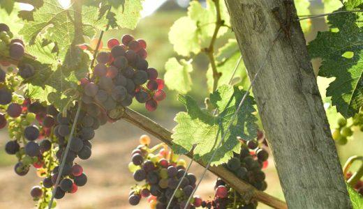 ワイン好きにおすすめの街!フランス南西部サンテミリオンの見どころ