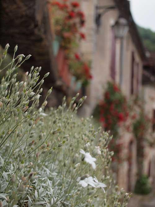 サンシルラポピー村で咲く草花