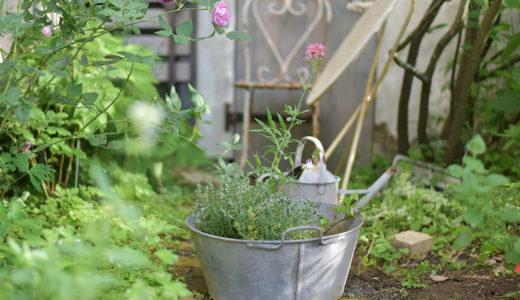 フレンチガーデンに憧れて。狭い庭でも楽しめる!ガーデニングのはじめ方