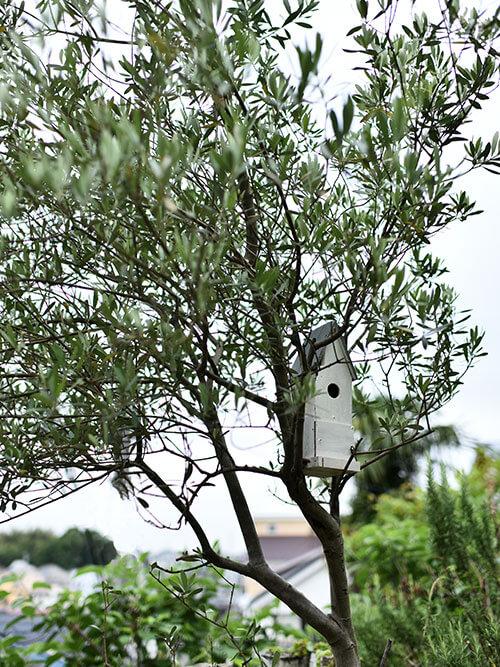 ナチュラルガーデンに合うシンボルツリー