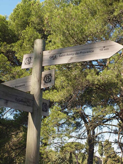 サン・レミ・ド・プロヴァンスへ向かう途中のオリーブ畑
