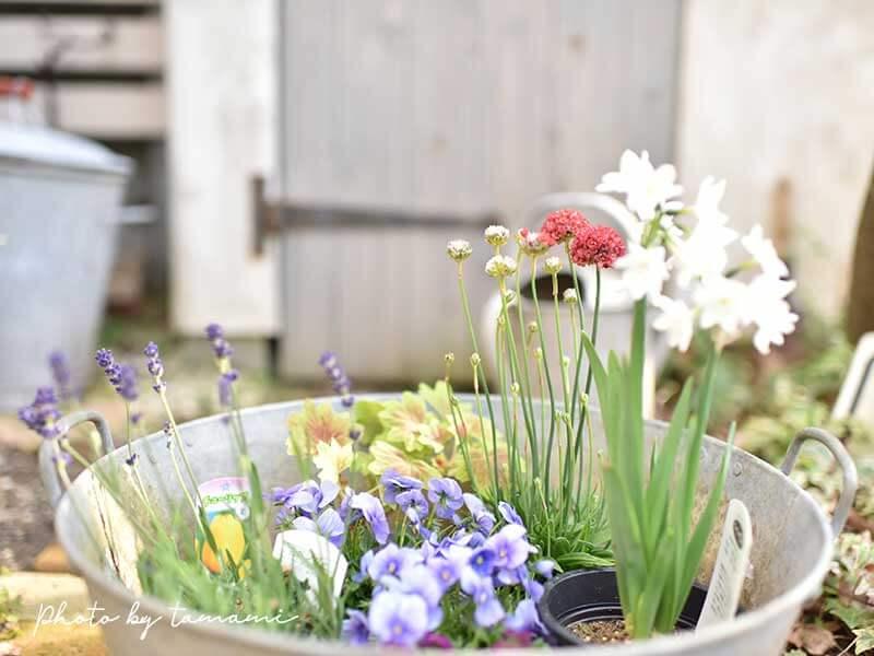 春の宿根草と一年草