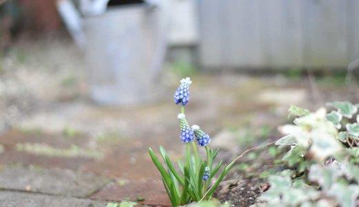 【春のガーデニング】初心者にもおすすめ!春に選ぶナチュラルガーデンにぴったりの宿根草と一年草