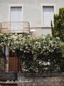 薔薇が印象的なカオールの街