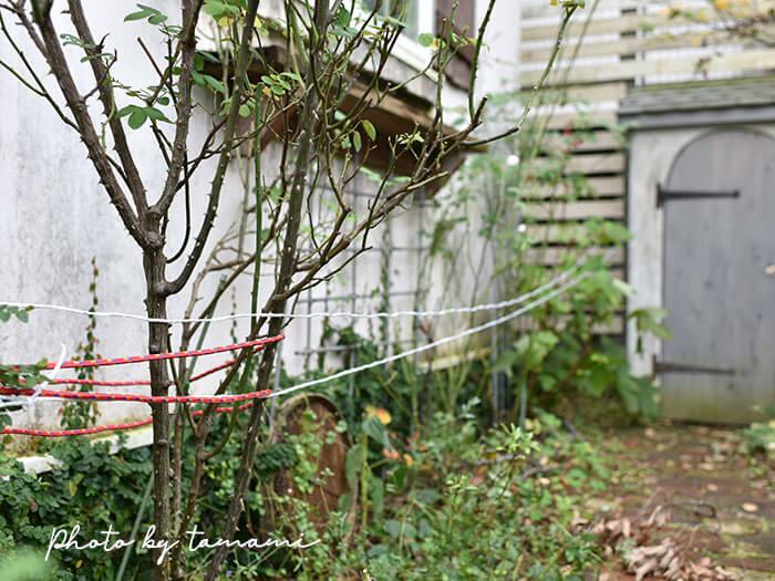 台風に備えて庭の植物を守る