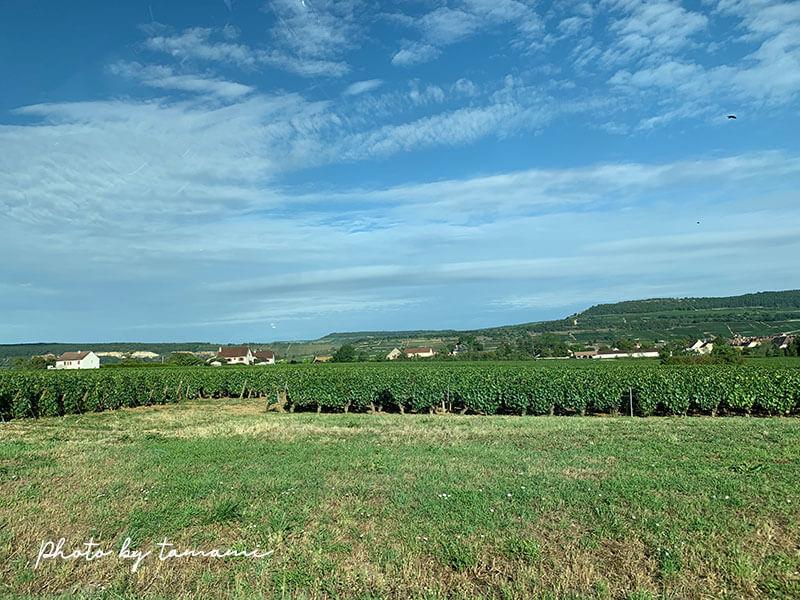 ブルゴーニュ地方のおすすめワイナリー巡りツアー