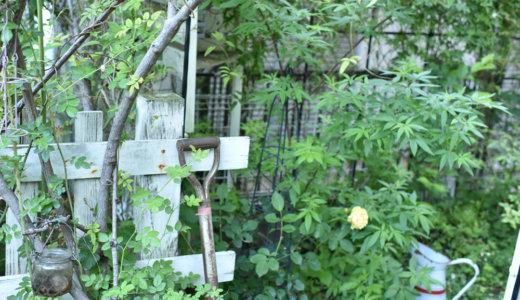 ガーデニング初心者にもおすすめ!シェードガーデン(日陰で陽当たりの悪い北側のお庭)でもナチュラルガーデンづくりを楽しむ