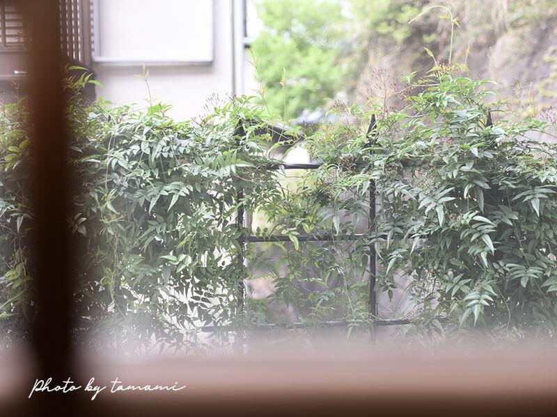 ナチュラルガーデンにぴったりな植物